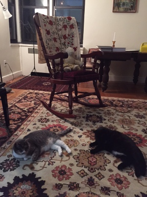 cats-on-rug