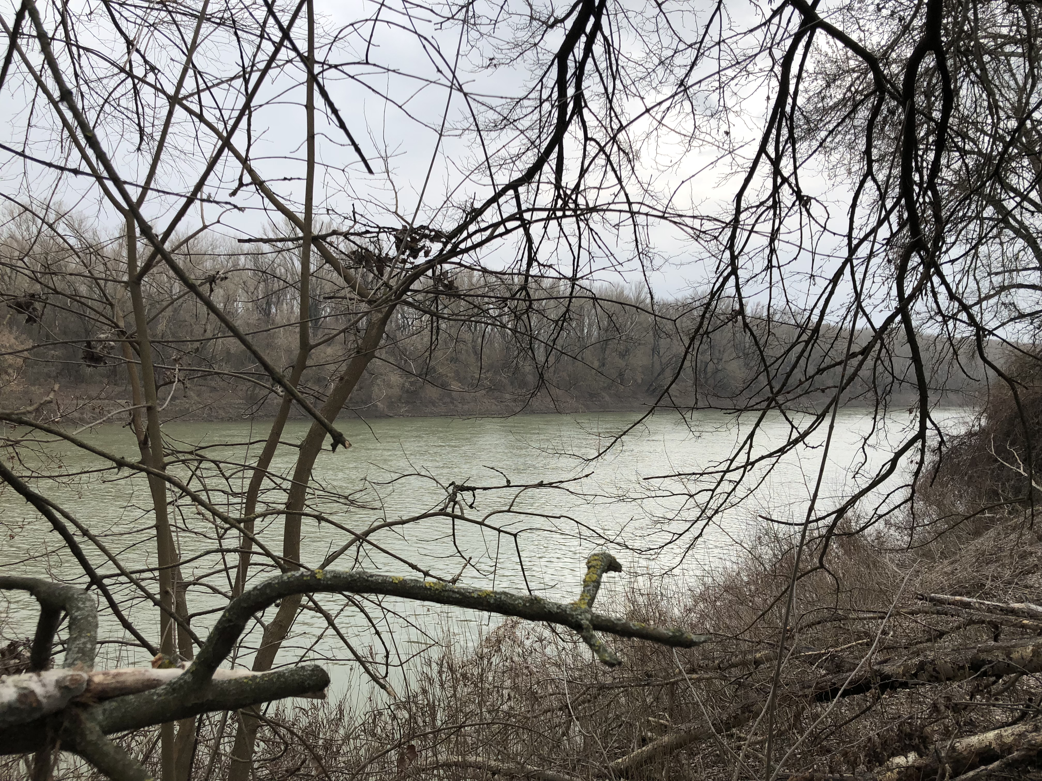 tisza and forest